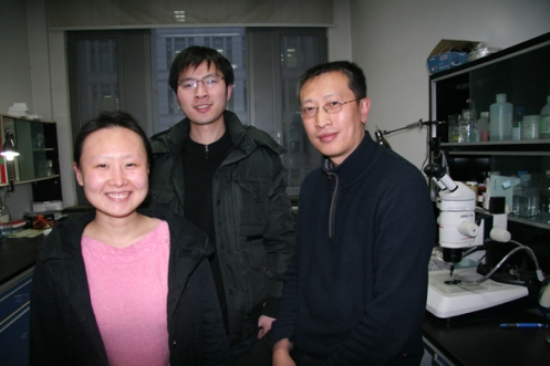 Professor Qi Zhou and his students at the State Key Laboratory of Reproductive Biology in Beijing are working on some very competitive stem cell research these days, a passion shared by a growing number of Chinese scientists.