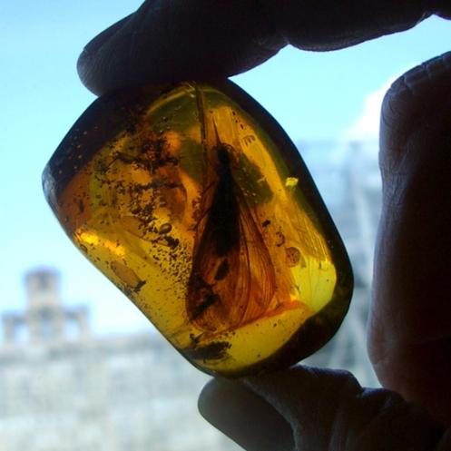 Prehistoric treasures locked inside amber.