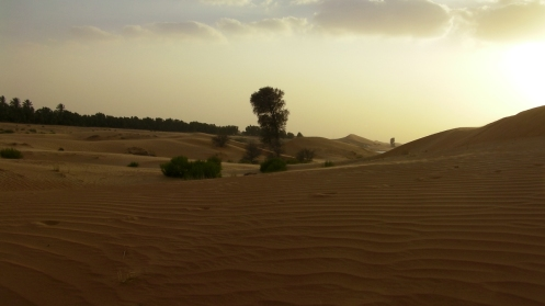 Just over that sand dune -- an oasis.