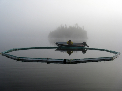 A biologist checks the fishing nets in Lake 240, as part of an experiment examining the effects of flame retardants (found in TVs and couches) on lakes.  The study showed they break down into even more toxic chemicals.  Photo provided by Diane Orihel.