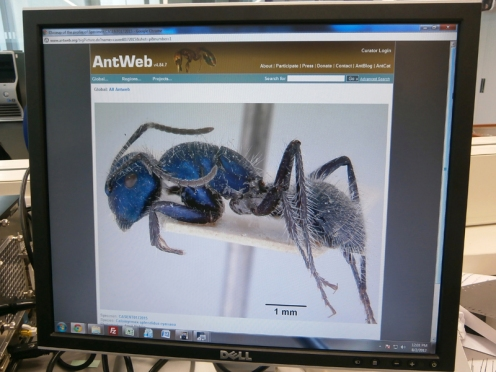 AntWeb is an unprecedented online ant photo gallery.