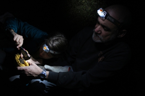 Medellin and his graduate student, Nora Knoop, measure a Mexican long-nosed bat near Tepoztlán, Mexico.