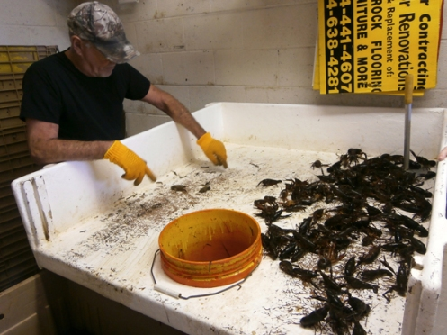 Big Fisherman -- a seafood outlet in New Orleans -- can sort hundreds of pounds of crawfish per day during peak season.